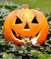 Cat_pumpkin