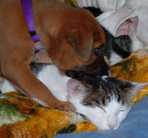 Ginger Kissing Her Kitty