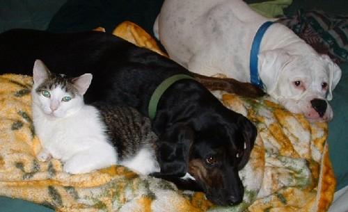 Spud & Smokey Cuddle The Weasel